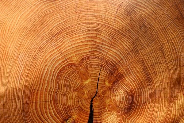 wood-3212803_1920.jpg